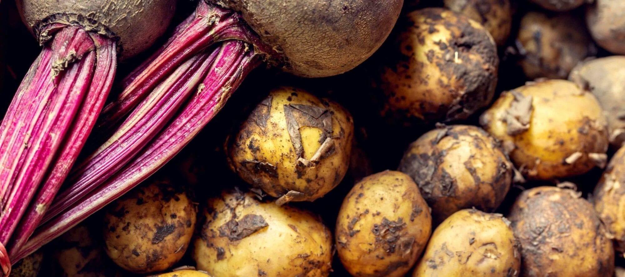 Billede af kartofler og rødbeder til inspiration for kartoffel og rødbedetårn