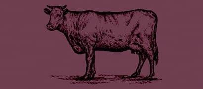 Ikon af ko