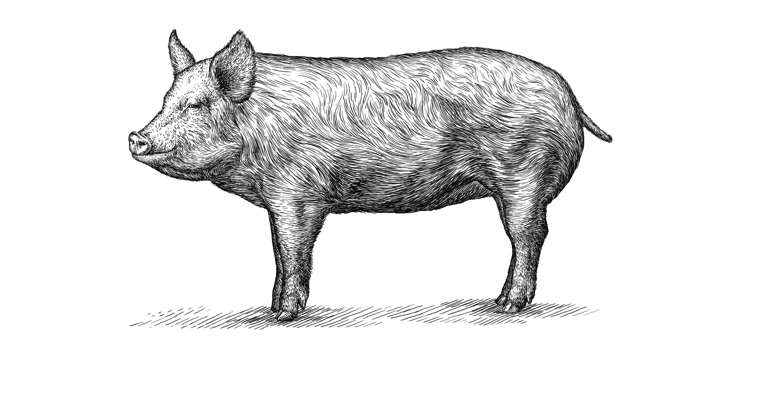 Ikon af gris